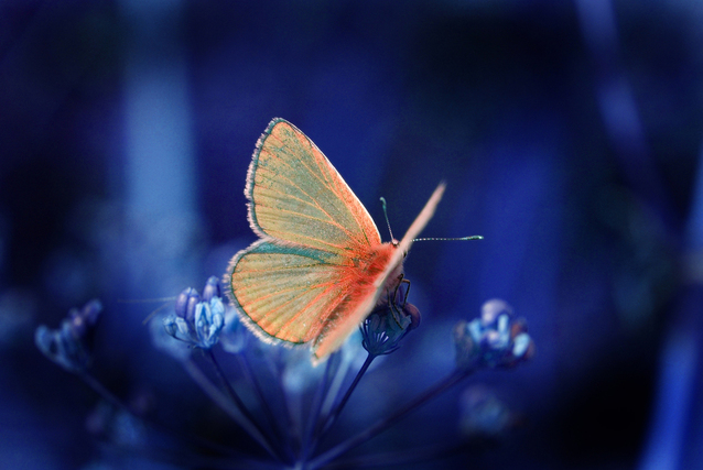 butterfly-1388397-638x427